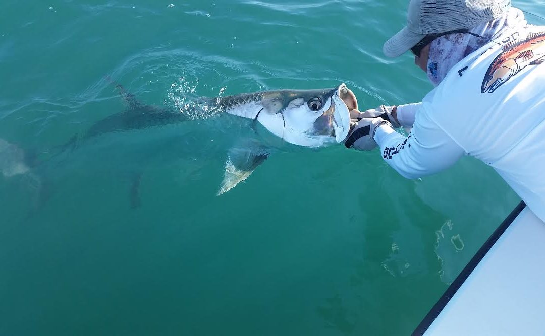 Tampa Fishing Charters / Stealth Fishing